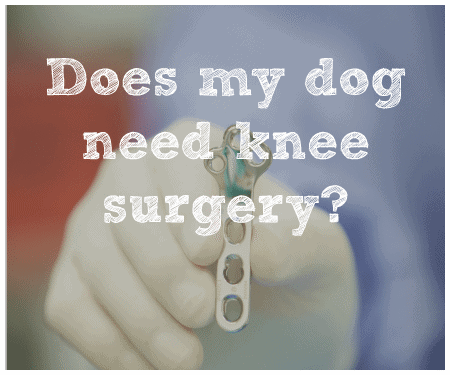 Does my dog need knee surgery?