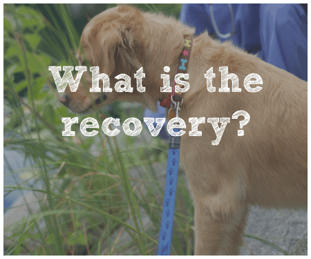 What is the recovery?