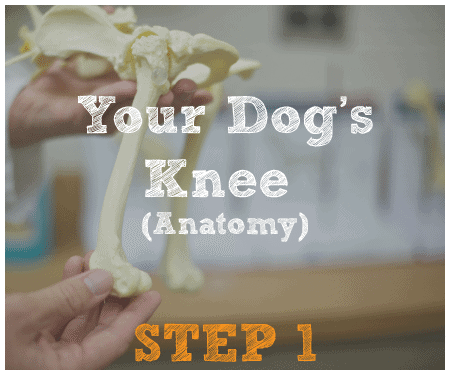 The six steps mobile veterinary specialist tplo tour step 1 ccuart Choice Image
