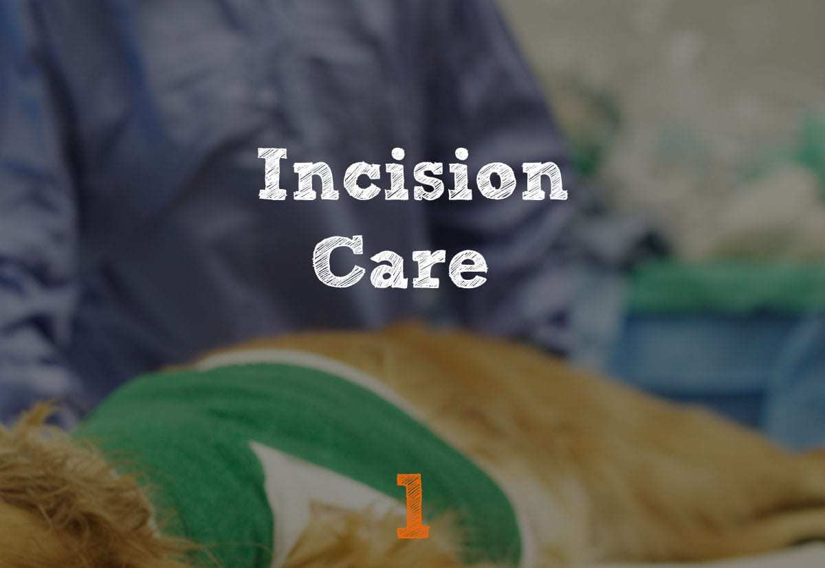 TPLO Recovery Incision Care