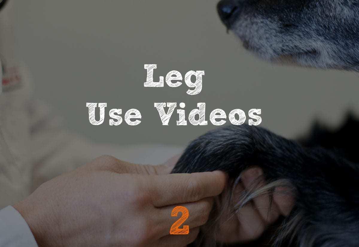 TPLO Recovery Leg Use
