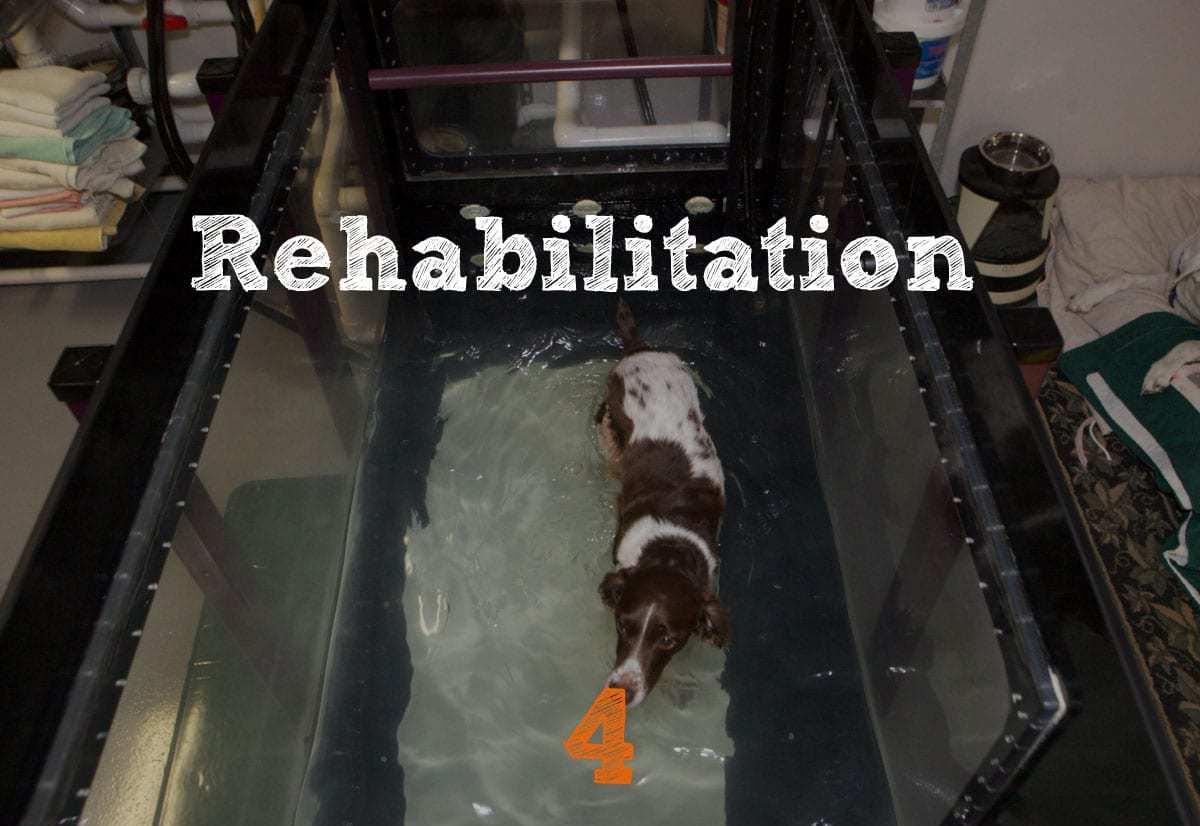 TPLO Recovery Rehabilitation