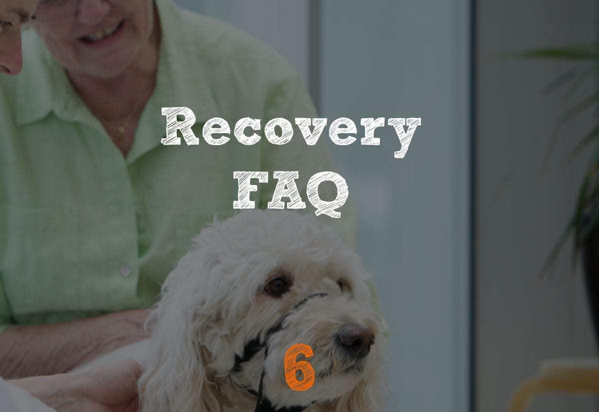 TPLO Recovery FAQ